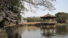 Park Nara na wiosnę (Sho Horiuchi/Wikipedia (domena publiczna))