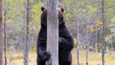 Esa Ringbom/Comedy Wildlife Photo Awards 2020