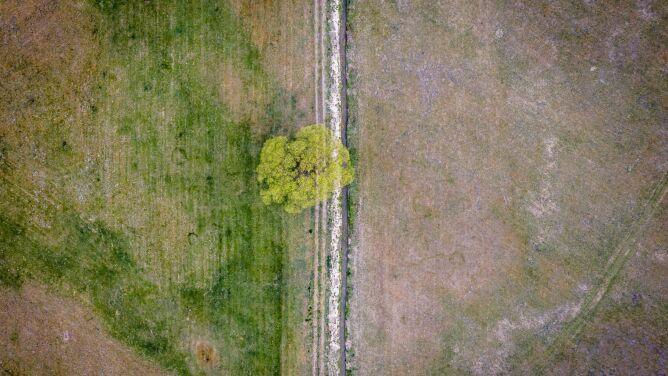 Susza w Polsce. Jakie jest ryzyko jej wystąpienia