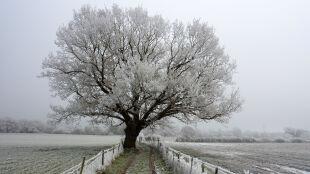 Prognoza pogody na dziś: mroźno. Miejscami popada śnieg