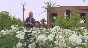 Tajemnice ogrodów Maroka (odc. 516)